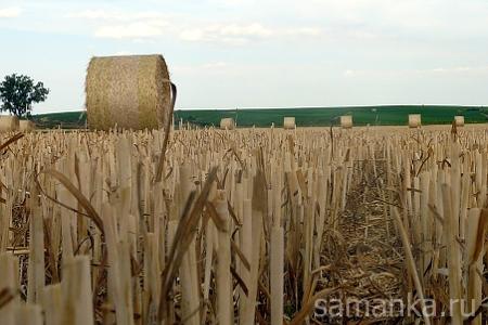 солома на поле