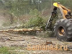 Хлыст – поваленный ствол дерева без веток