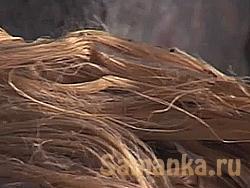 Джут – растение, семейства липовых, на территории России не произрастающий, но востребованный в виде продукции, межвенцового утеплителя