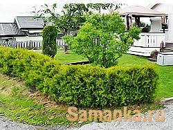 Изгородь – ограда, сплетаемая из жердей и прутьев или штакетника