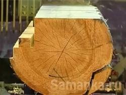 Заболонь – это слой древесины, располагаемый за камбием, считающийся молодой, не созревшей еще древесиной
