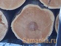 Ядровая древесина – название зоны, расположенной в центральной области ствола, характеризующейся завершенностью образовательных процессов, постоянством, и отличающейся более темным цветом от заболонной части